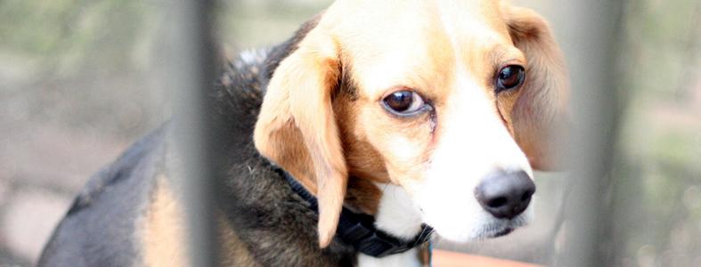 Zlostavljanje pasa
